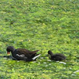 Guided Bird Walk – Winter Birds
