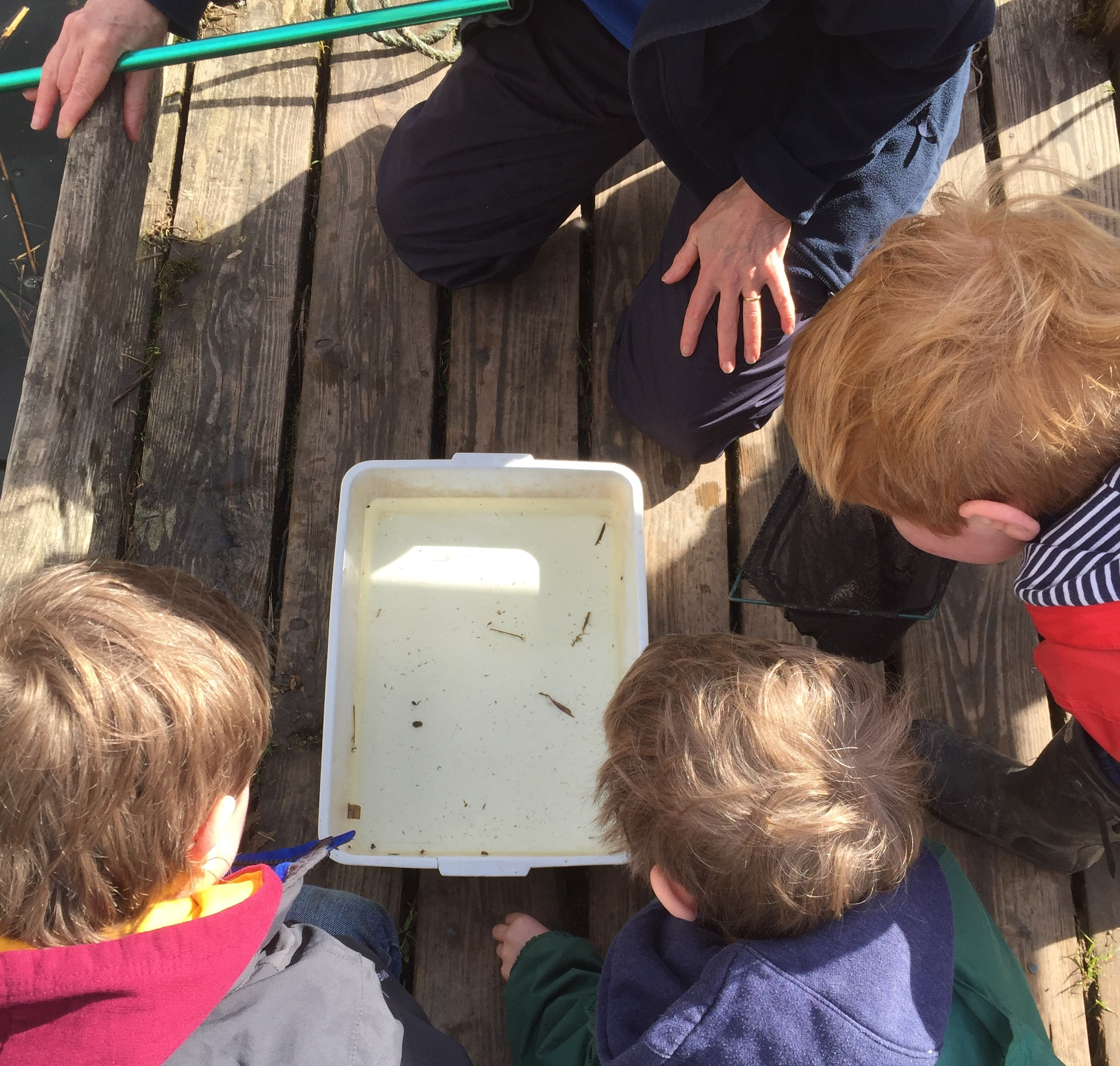 Easter Holidays – Pond Dipping