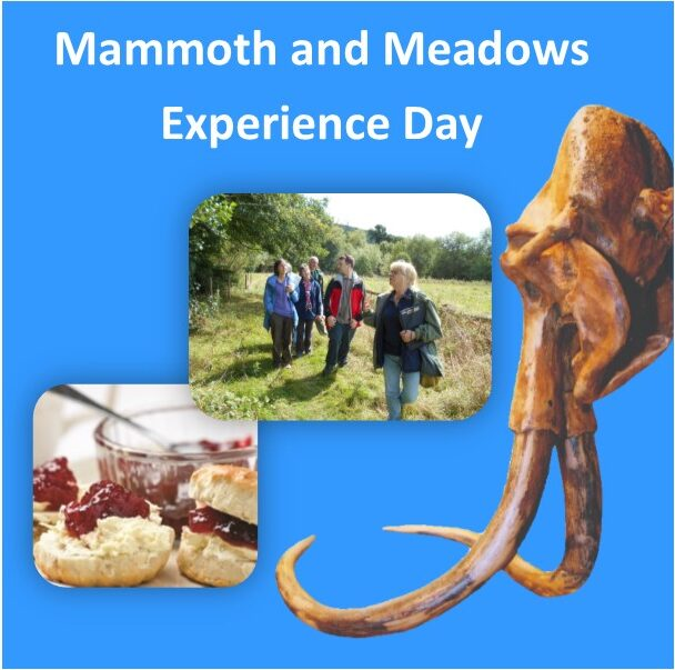 Mammoth and Meadows Experience Day