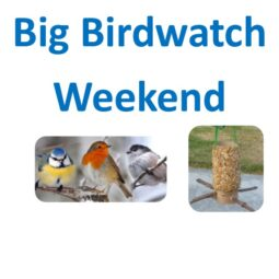 Big Birdwatch Weekend